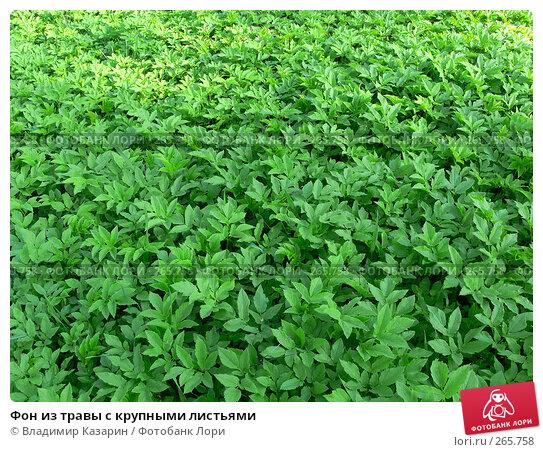 Фон из травы с крупными листьями, фото № 265758, снято 28 апреля 2008 г. (c) Владимир Казарин / Фотобанк Лори