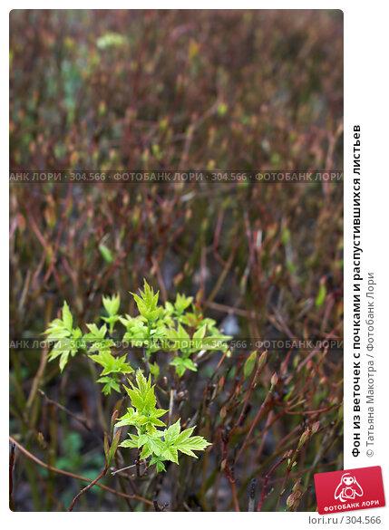 Фон из веточек с почками и распустившихся листьев, фото № 304566, снято 21 апреля 2008 г. (c) Татьяна Макотра / Фотобанк Лори