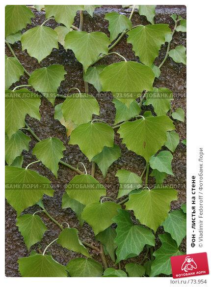 Купить «Фон - листья на стене», фото № 73954, снято 31 июля 2007 г. (c) Vladimir Fedoroff / Фотобанк Лори