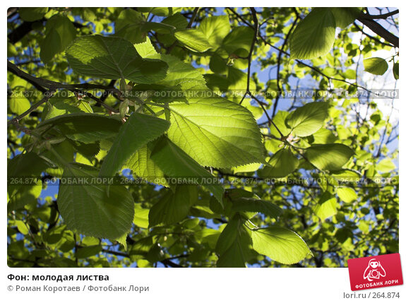 Фон: молодая листва, фото № 264874, снято 27 апреля 2008 г. (c) Роман Коротаев / Фотобанк Лори