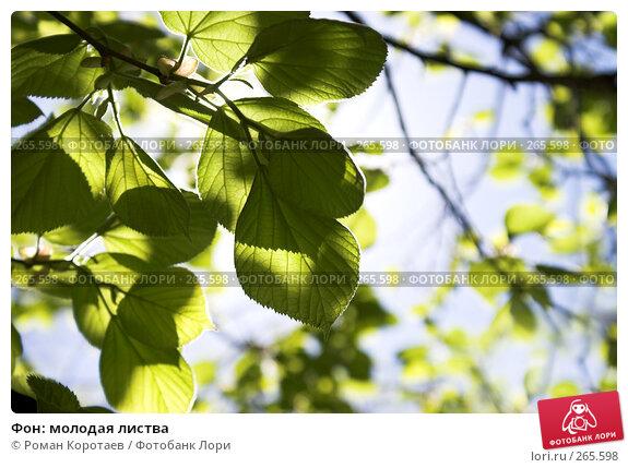 Фон: молодая листва, фото № 265598, снято 27 апреля 2008 г. (c) Роман Коротаев / Фотобанк Лори