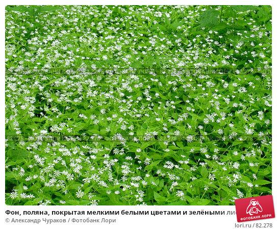Фон, поляна, покрытая мелкими белыми цветами и зелёными листьями, фото № 82278, снято 11 июня 2006 г. (c) Александр Чураков / Фотобанк Лори