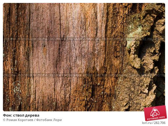 Купить «Фон: ствол дерева», фото № 282706, снято 30 марта 2008 г. (c) Роман Коротаев / Фотобанк Лори