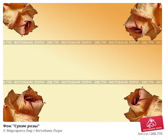 """Купить «Фон """"Сухие розы""""», фото № 288770, снято 3 марта 2007 г. (c) Маргарита Лир / Фотобанк Лори"""