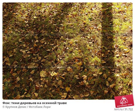 Фон: тени деревьев на осенней траве, фото № 31722, снято 19 сентября 2006 г. (c) Крупнов Денис / Фотобанк Лори