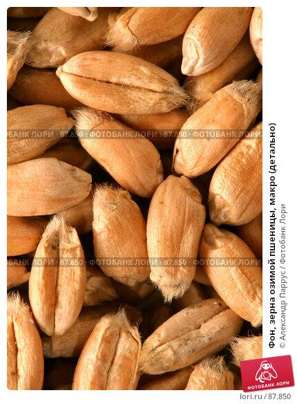 Фон, зерна озимой пшеницы, макро (детально), фото № 87850, снято 18 сентября 2007 г. (c) Александр Паррус / Фотобанк Лори