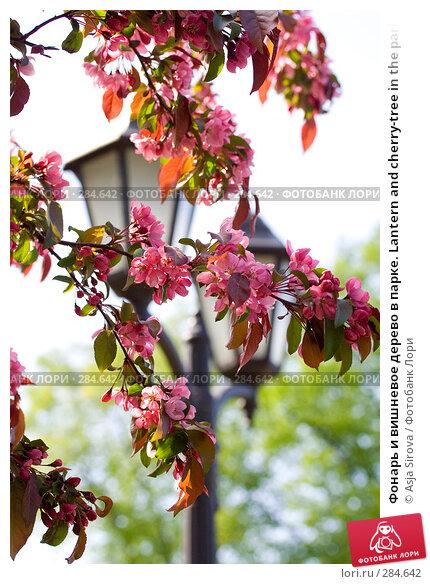 Фонарь и вишневое дерево в парке. Lantern and cherry-tree in the park, фото № 284642, снято 11 мая 2008 г. (c) Asja Sirova / Фотобанк Лори