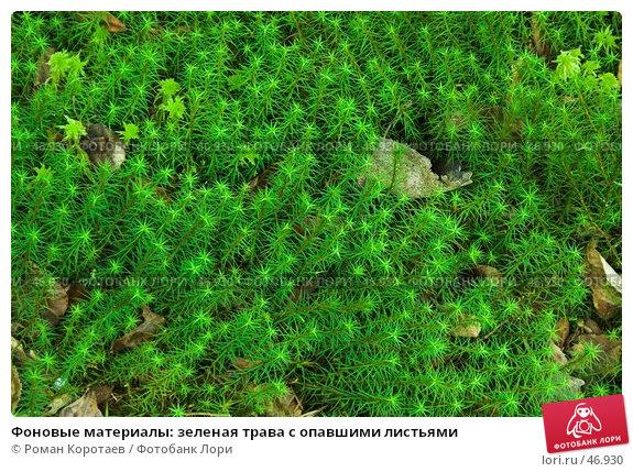 Фоновые материалы: зеленая трава с опавшими листьями, фото № 46930, снято 11 мая 2007 г. (c) Роман Коротаев / Фотобанк Лори