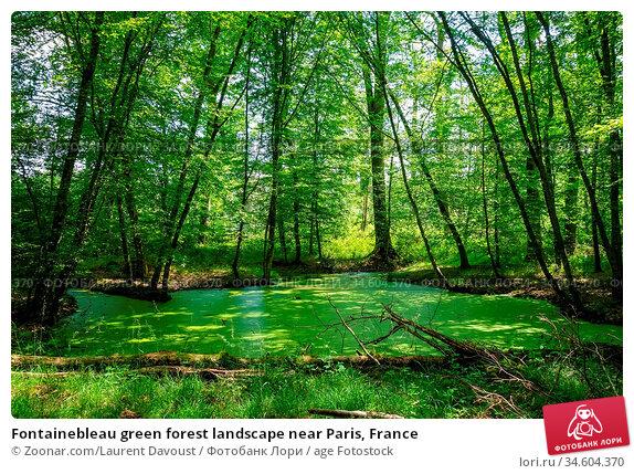 Fontainebleau green forest landscape near Paris, France. Стоковое фото, фотограф Zoonar.com/Laurent Davoust / age Fotostock / Фотобанк Лори