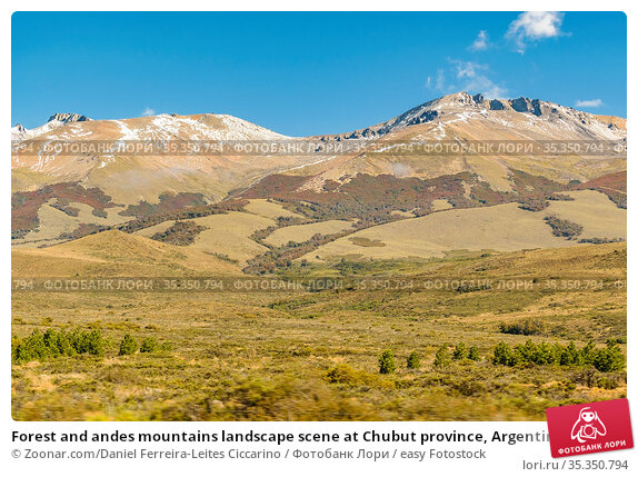 Forest and andes mountains landscape scene at Chubut province, Argentina... Стоковое фото, фотограф Zoonar.com/Daniel Ferreira-Leites Ciccarino / easy Fotostock / Фотобанк Лори