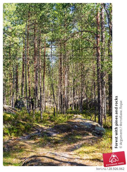 Купить «Forest with pines and rocks», фото № 28926062, снято 18 июля 2018 г. (c) Argument / Фотобанк Лори