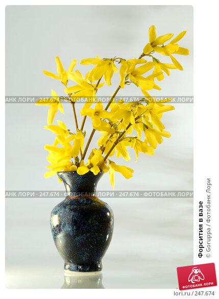 Форсития в вазе, фото № 247674, снято 9 апреля 2008 г. (c) Goruppa / Фотобанк Лори