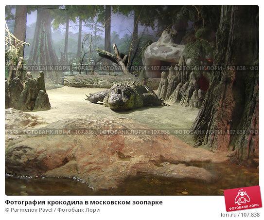 Фотография крокодила в московском зоопарке, фото № 107838, снято 8 ноября 2004 г. (c) Parmenov Pavel / Фотобанк Лори