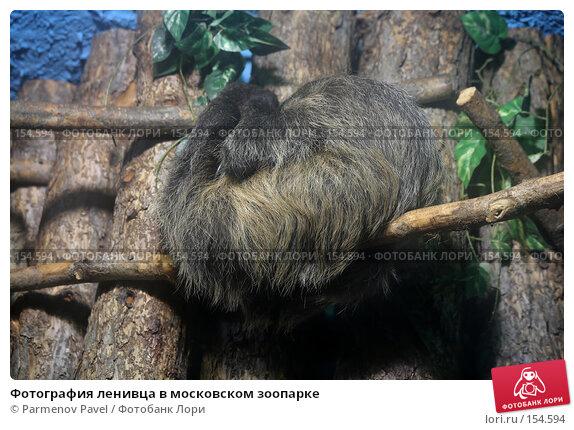 Фотография ленивца в московском зоопарке, фото № 154594, снято 11 декабря 2007 г. (c) Parmenov Pavel / Фотобанк Лори