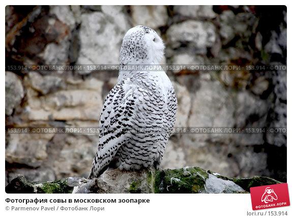 Фотография совы в московском зоопарке, фото № 153914, снято 11 декабря 2007 г. (c) Parmenov Pavel / Фотобанк Лори