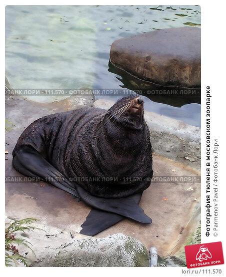Фотография тюленя в московском зоопарке, фото № 111570, снято 8 ноября 2004 г. (c) Parmenov Pavel / Фотобанк Лори