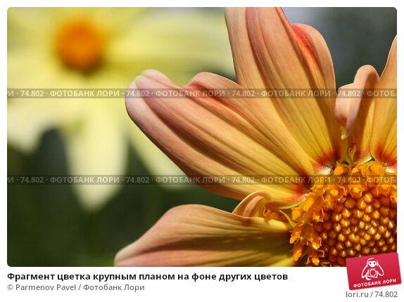 Фрагмент цветка крупным планом на фоне других цветов, фото № 74802, снято 18 августа 2007 г. (c) Parmenov Pavel / Фотобанк Лори