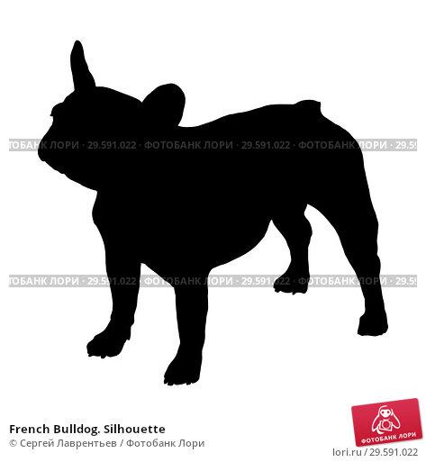 Купить «French Bulldog. Silhouette», иллюстрация № 29591022 (c) Сергей Лаврентьев / Фотобанк Лори