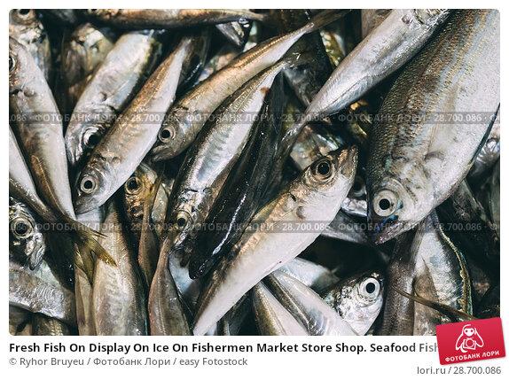 Купить «Fresh Fish On Display On Ice On Fishermen Market Store Shop. Seafood Fish Background. Top View.», фото № 28700086, снято 27 мая 2016 г. (c) easy Fotostock / Фотобанк Лори
