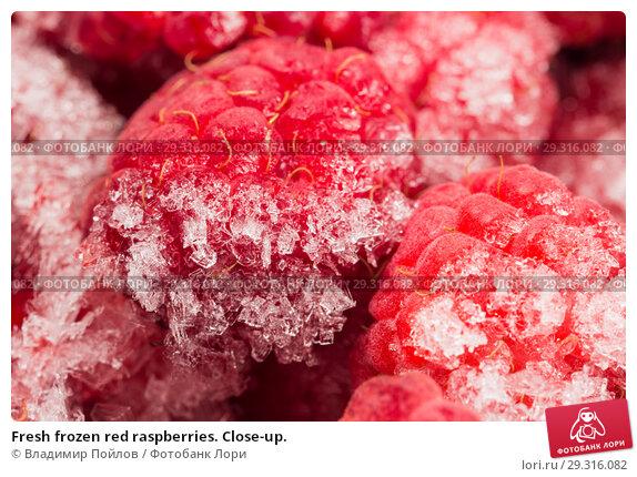 Купить «Fresh frozen red raspberries. Close-up.», фото № 29316082, снято 20 ноября 2018 г. (c) Владимир Пойлов / Фотобанк Лори