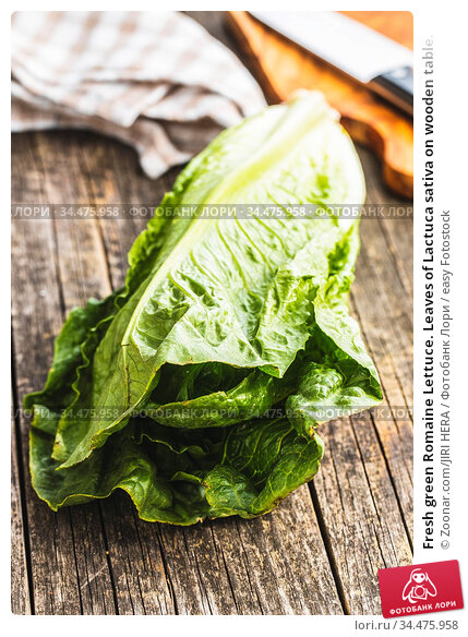 Fresh green Romaine Lettuce. Leaves of Lactuca sativa on wooden table. Стоковое фото, фотограф Zoonar.com/JIRI HERA / easy Fotostock / Фотобанк Лори