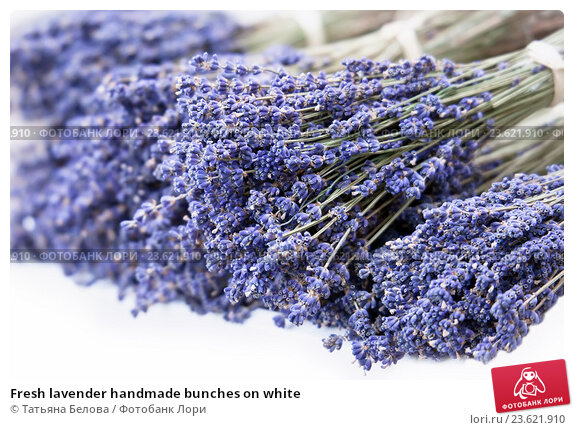 Купить «Fresh lavender handmade bunches on white», фото № 23621910, снято 6 сентября 2016 г. (c) Татьяна Белова / Фотобанк Лори