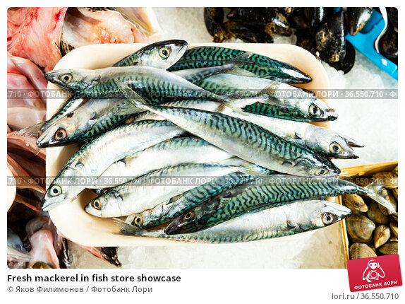 Fresh mackerel in fish store showcase. Стоковое фото, фотограф Яков Филимонов / Фотобанк Лори