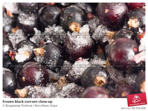Купить «Frozen black currant close-up», фото № 29316030, снято 19 ноября 2018 г. (c) Владимир Пойлов / Фотобанк Лори