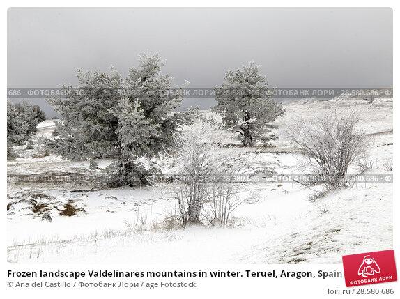 Купить «Frozen landscape Valdelinares mountains in winter. Teruel, Aragon, Spain.», фото № 28580686, снято 25 марта 2018 г. (c) age Fotostock / Фотобанк Лори