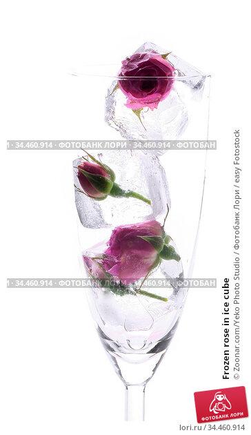 Frozen rose in ice cube. Стоковое фото, фотограф Zoonar.com/Yeko Photo Studio / easy Fotostock / Фотобанк Лори