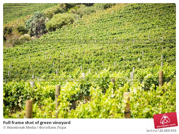 Купить «Full frame shot of green vineyard», фото № 26669410, снято 16 февраля 2016 г. (c) Wavebreak Media / Фотобанк Лори