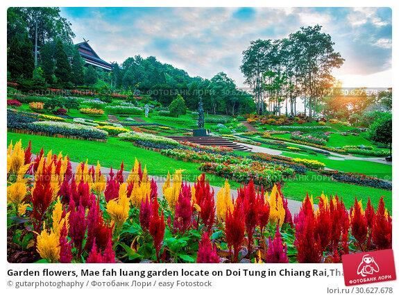 Купить «Garden flowers, Mae fah luang garden locate on Doi Tung in Chiang Rai,Thailand.», фото № 30627678, снято 19 октября 2016 г. (c) easy Fotostock / Фотобанк Лори