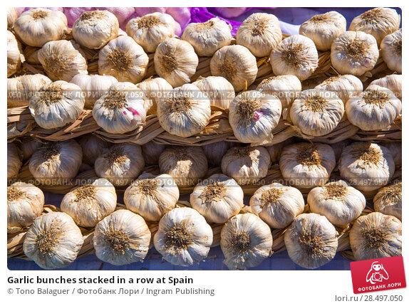 Купить «Garlic bunches stacked in a row at Spain», фото № 28497050, снято 6 октября 2013 г. (c) Ingram Publishing / Фотобанк Лори