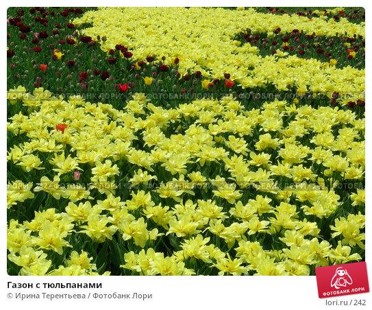 Газон с тюльпанами, эксклюзивное фото № 242, снято 11 мая 2004 г. (c) Ирина Терентьева / Фотобанк Лори