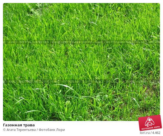 Газонная трава, фото № 4462, снято 21 мая 2006 г. (c) Агата Терентьева / Фотобанк Лори