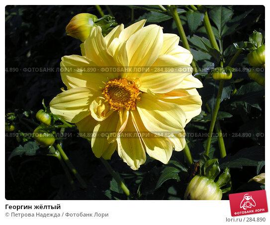 Георгин жёлтый, фото № 284890, снято 25 августа 2006 г. (c) Петрова Надежда / Фотобанк Лори
