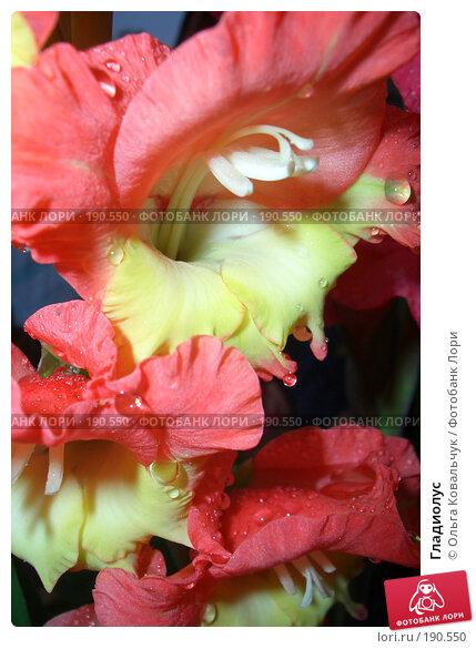Гладиолус, фото № 190550, снято 14 августа 2004 г. (c) Ольга Ковальчук / Фотобанк Лори