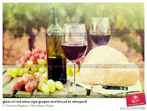 Купить «glass of red wine ripe grapes and bread in vineyard», фото № 29637654, снято 11 сентября 2017 г. (c) Татьяна Яцевич / Фотобанк Лори
