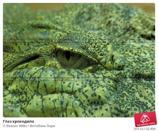 Глаз крокодила, фото № 32454, снято 20 июня 2006 г. (c) Eleanor Wilks / Фотобанк Лори
