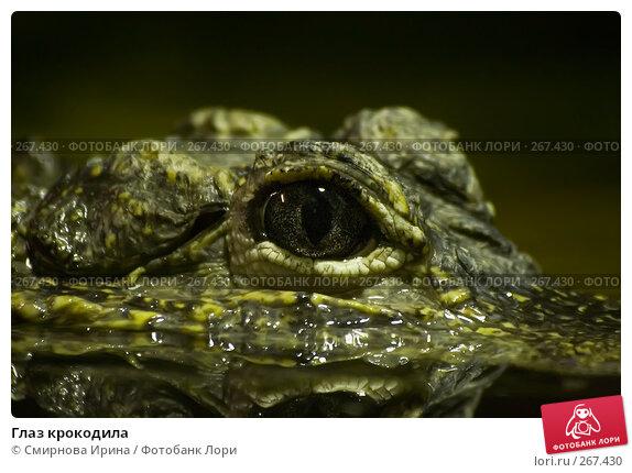 Глаз крокодила, фото № 267430, снято 8 апреля 2008 г. (c) Смирнова Ирина / Фотобанк Лори