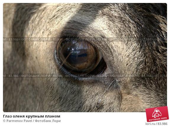 Глаз оленя крупным планом, фото № 83986, снято 1 мая 2017 г. (c) Parmenov Pavel / Фотобанк Лори