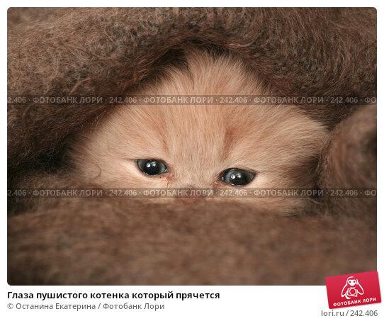 Глаза пушистого котенка который прячется, фото № 242406, снято 19 марта 2008 г. (c) Останина Екатерина / Фотобанк Лори
