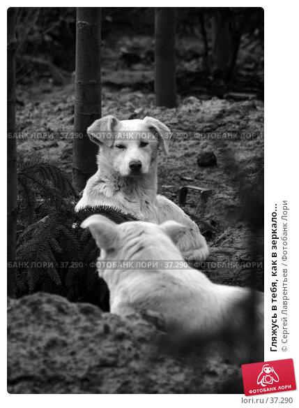 Гляжусь в тебя, как в зеркало..., фото № 37290, снято 16 апреля 2006 г. (c) Сергей Лаврентьев / Фотобанк Лори