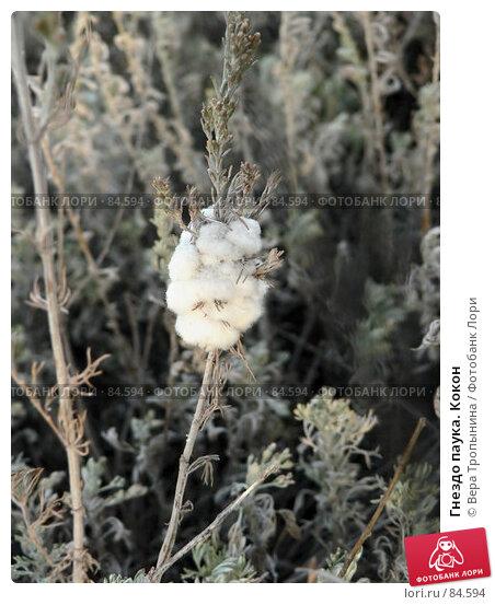Гнездо паука. Кокон, фото № 84594, снято 27 июня 2017 г. (c) Вера Тропынина / Фотобанк Лори