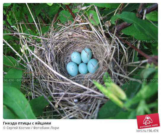 Гнездо птицы с яйцами, фото № 96474, снято 18 июня 2007 г. (c) Сергей Костин / Фотобанк Лори