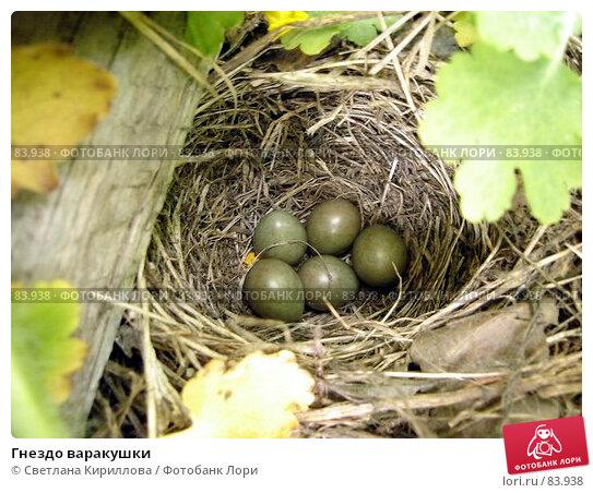 Купить «Гнездо варакушки», фото № 83938, снято 24 апреля 2018 г. (c) Светлана Кириллова / Фотобанк Лори