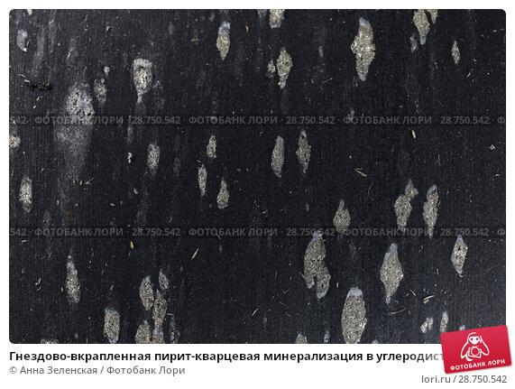 Купить «Гнездово-вкрапленная пирит-кварцевая минерализация в углеродистых сланцах», фото № 28750542, снято 1 мая 2018 г. (c) Анна Зеленская / Фотобанк Лори