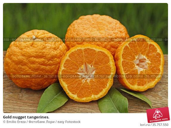 Gold nugget tangerines. Стоковое фото, фотограф Emilio Ereza / easy Fotostock / Фотобанк Лори