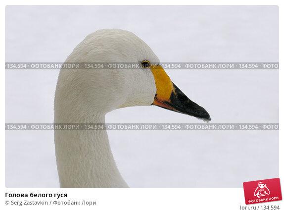 Голова белого гуся, фото № 134594, снято 7 ноября 2004 г. (c) Serg Zastavkin / Фотобанк Лори