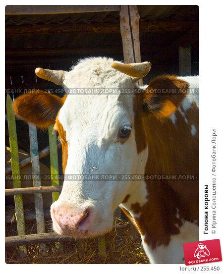 Голова коровы, фото № 255450, снято 29 апреля 2006 г. (c) Ирина Солошенко / Фотобанк Лори
